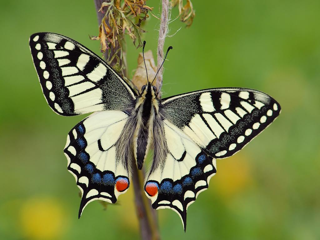 Фото коллекция бабочек